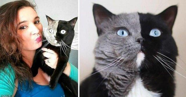 Dwulicowy kot Narnia został ojcem, a genetyka ponownie wszystkich zaskoczyła: oto zdjęcia nietypowych kociąt