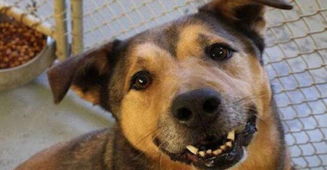 Dyrektorce schroniska poradzono, aby pozbyła się psa, którego nikt nie chciał zabierać, a dzień 2381 stał się decydujący