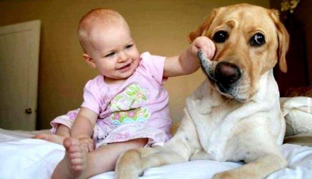 Kilka przykładów tego, że pies jest najlepszym przyjacielem dziecka