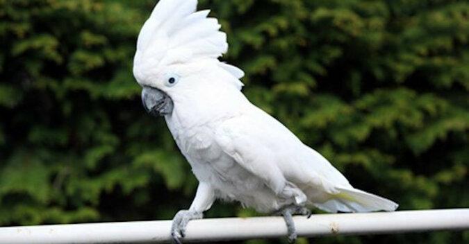 """Papuga """"szczeka"""" na psa, a pies próbuje zrozumieć, co chce """"powiedzieć"""". Wideo"""