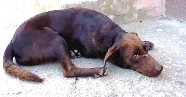 Bezpański pies leży każdego dnia w tym samym miejscu i czeka na adopcję