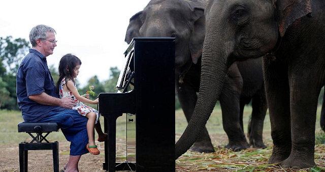 Wideo: słonie melomany - dlaczego zwierzęta zaczynają płakać od muzyki utalentowanego pianisty