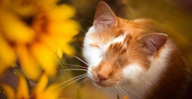 Ślepy jednooki kot postrzega otaczający go świat zupełnie inaczej niż jego zdrowi krewni