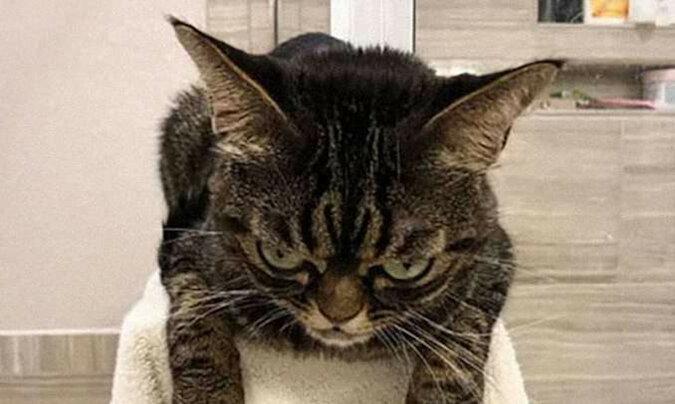 Poznaj najbardziej złego kota w Internecie