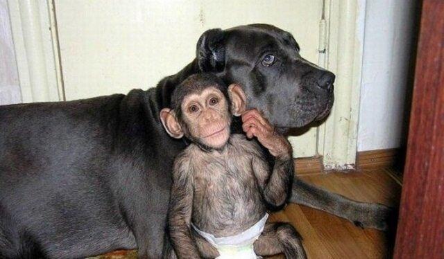 """Ten maluszek został porzucony przez niedbałą matkę, ale niespodziewanie został """"adoptowany"""" przez psa"""