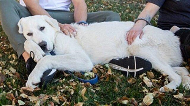 """Pies chciał tylko być kochany, a nie """"pracować"""" na farmie. Więc został wyrzucony"""
