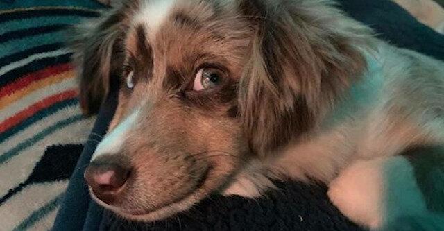Najbardziej pozytywny challenge na świecie: właściciele psów ujawniają zdjęcia uśmiechniętych oraz szczęśliwych psów