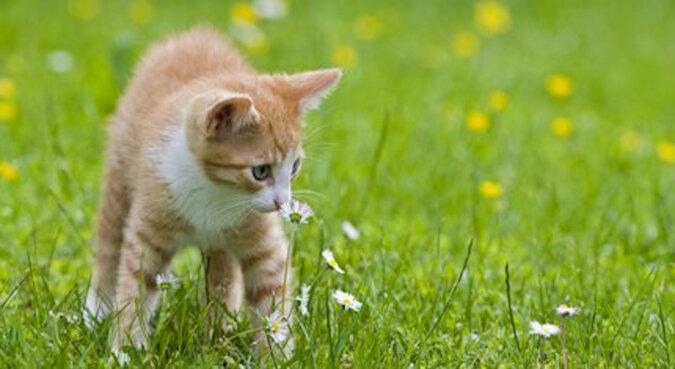 Jak on to robi? Złodziej kot stał się podobny do piłki, a weterynarze wzruszają ramionami