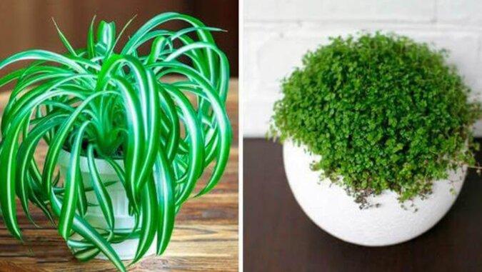 8 roślin, które rozwijają się nawet w zaciemnionych zakamarkach twojego mieszkania