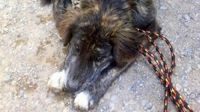 Na stacji benzynowej do pary podszedł pies, który się położył przed ludźmi błagając o pomoc