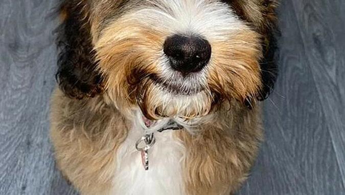 Pies z wielkimi rzęsami fascynuje ludzi