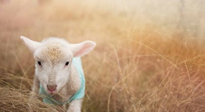 """""""Nigdy więcej samotności"""": pies – model zaadoptował porzucone jagnie"""
