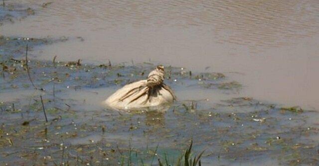 Zauważyli niezwykły worek w wodzie. Na szczęście przybyli na czas i nie dopuścili do tragedii