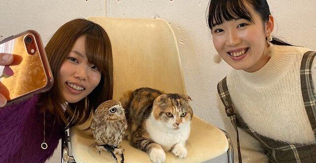 Niemal ludzka przyjaźń między sową Fuku i kotem Marimo: zdjęcia udowadniają, że czasami prawa natury nie działają