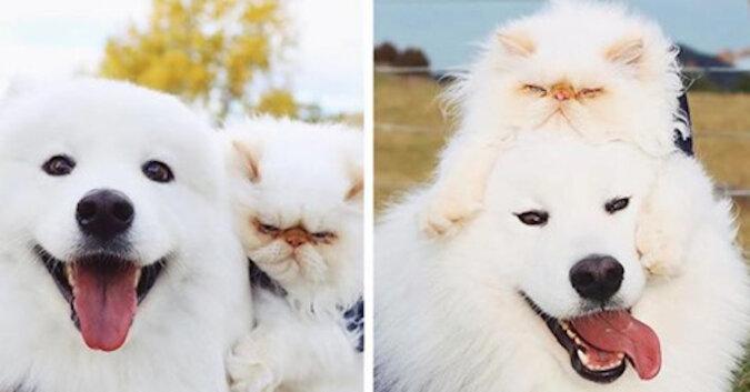 Przyjaźń gderliwego kota i wiecznie szczęśliwego psa oszołomiła Internet