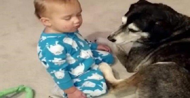 Chłopczyk prawie zasnął w pozycji siedzącej obok psa. Ale poczekaj na to, co dzieje się w 0:22 minucie