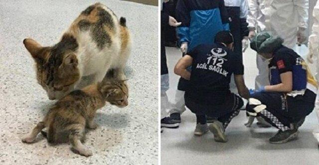 Bezdomna kotka przyniosła swoje chore kocię prosto do szpitala