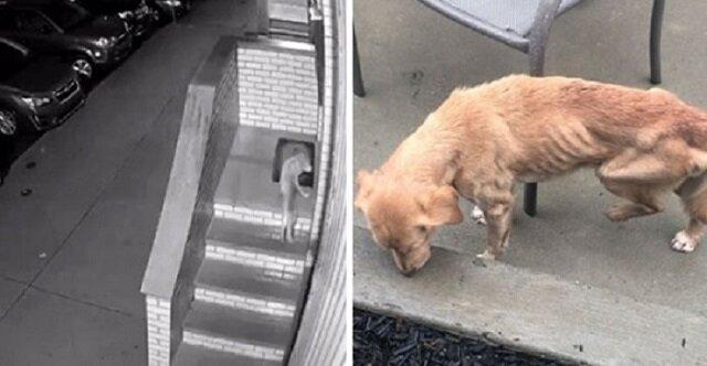 Pies potrzebujący pomocy przyszedł do mężczyzny, który zapomniał zamknąć drzwi do domu