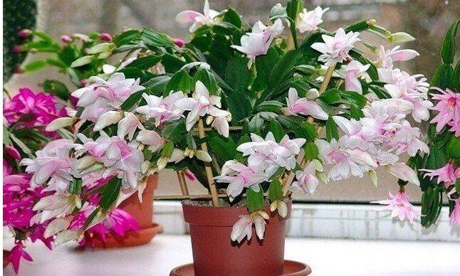 Najprostszy nawóz, który podoba się domowym roślinom
