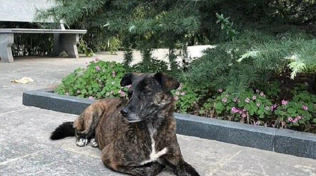 Najwierniejszy przyjaciel: porzucony pies czeka na swojego właściciela od trzech lat w pobliżu domu