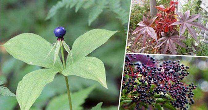 10 roślin, na które trzeba uważać