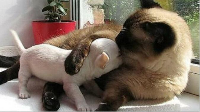 Wspaniałe zestawienie zwierząt - przyjaciół. Zdjęcia