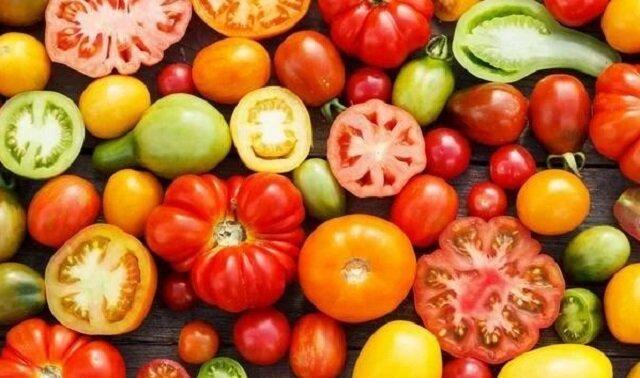 Indyjski sposób uprawy pomidorów bez chemicznego nawożenia