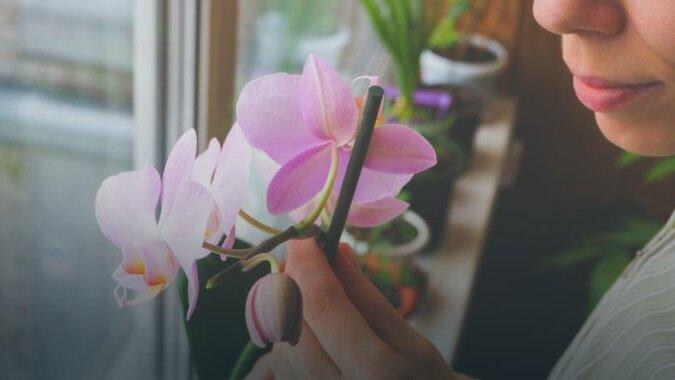 Jak podlewać storczyki - cztery zasady, które trzeba znać. W przeciwnym razie orchidee nie zakwitną