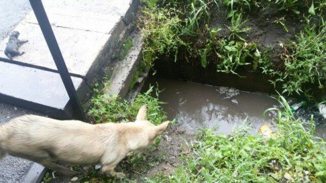 Mama psa wezwała przechodniów do pomocy, gdy jej szczenięta zostały zalane wodą