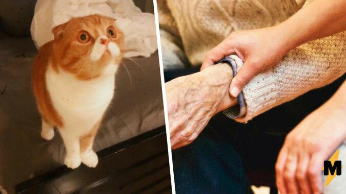 """Córka przyprowadziła kota do chorego taty i uwierzyła w cud. Czynu zwierzaka nie można wytłumaczyć nawet """"magią ewolucji"""""""