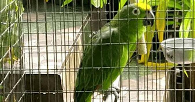 Papuga myślała, że jest sama w domu i zorganizowała koncert