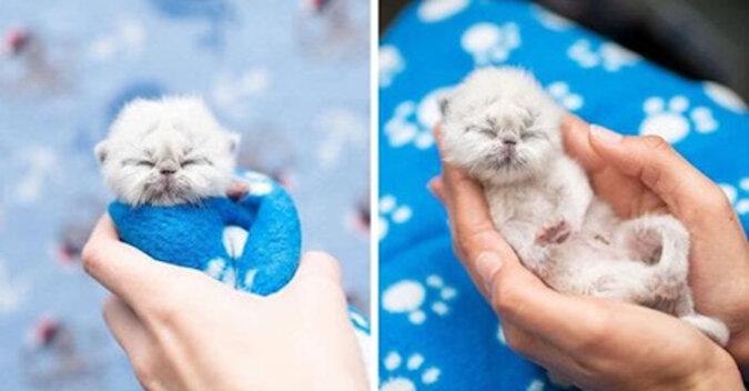 Kociak, który ma przydomek Dziadek, podbija serca ludzi