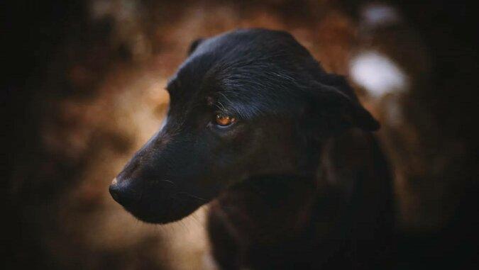 Zaginiony pies odnalazł właścicielkę w hipermarkecie trzy tygodnie później
