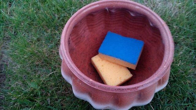 Gąbka kuchenna - 5 zastosowań w ogrodzie
