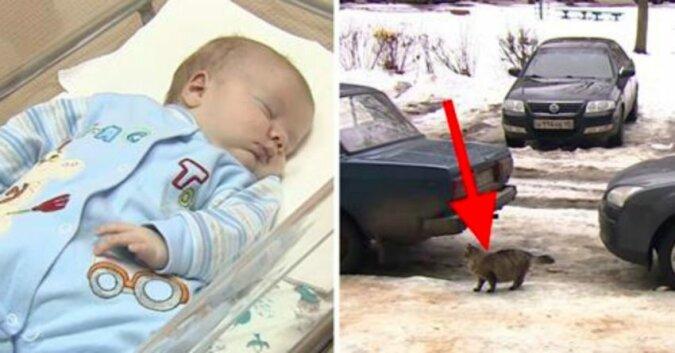 Matka rzuciła dziecko, by umarł na mrozie. Ale tylko zobacz co zrobił ten kot