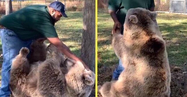Mężczyzna przyszedł odwiedzić osieroconą niedźwiedzicę, którą wychował