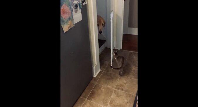 Prawdziwy dżentelmen: kot podbił sieć swoją troską o psa. Wideo