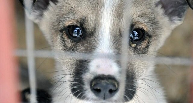 Poszła do schroniska, aby wybrać psa. Przeczytaj tę historię