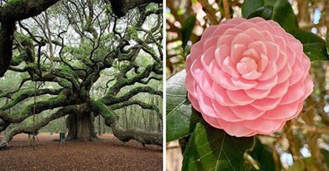 Zielone i kolorowe piękno - zobacz jak piękna jest przyroda