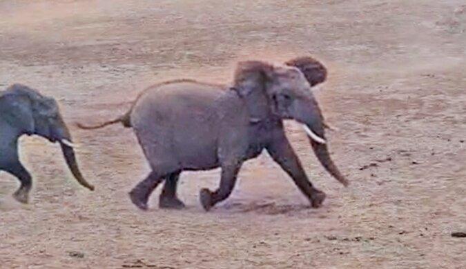 Słonie uczą turystów jak zachowywać się na łonie natury: wideo