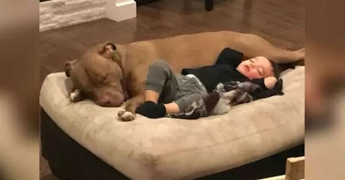 Dobro zawsze wraca: uratowany pies leczy chłopca