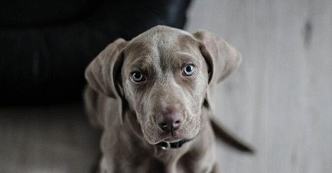 Pies nie chce słuchać wypominanie właścicieli i naśladuje ich. Wideo
