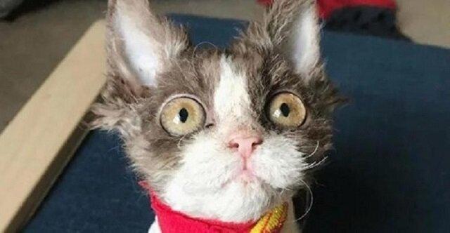 Historia Appy – kotki o odrażającym wyglądzie z powodu wady wrodzonej, której nikt nie chciał zabrać ze schroniska