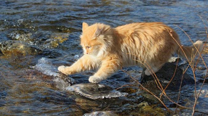 Gdybym miał takiego kota: zwierzak pomaga rybakowi łowić ryby - nawet bez wędki