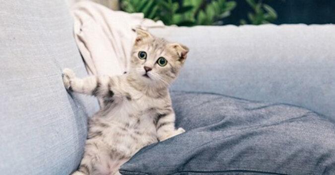 """""""Zabierz to natychmiast!"""": dlaczego koty tak bardzo boją się ogórków. Wideo"""