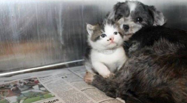 Znaleźli bezpańskiego psa ukrytego w krzakach. Zobacz co pies chciał im pokazać