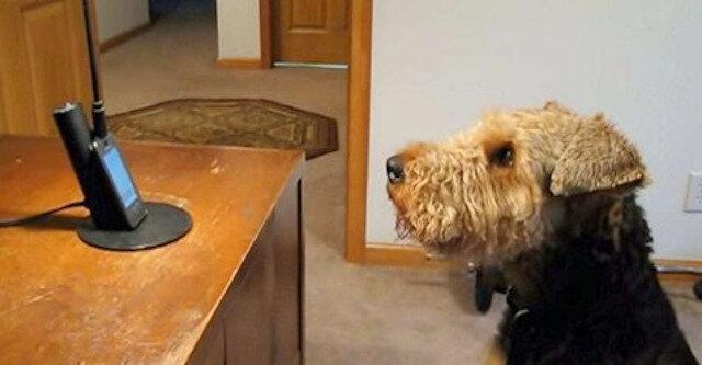 Pies bardzo tęsknił za matką i postanowił do niej zadzwonić. Wzruszająca rozmowa