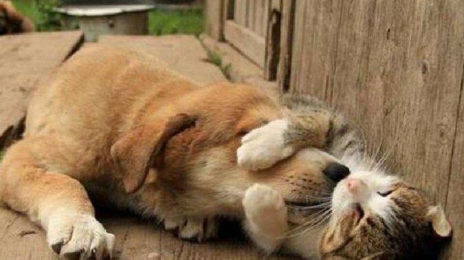 Jak bezdomna kotka opiekowała się zagubionym szczeniakiem