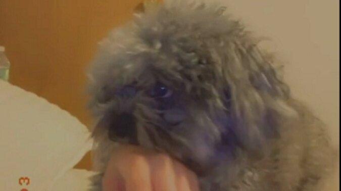 Pies gryzący dziewczynę udaje niewinnego, gdy ona woła mamę. Zabawne wideo