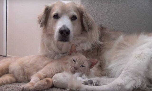 To jest miłość: uściski kota i psa wzruszyły Internet. Wideo